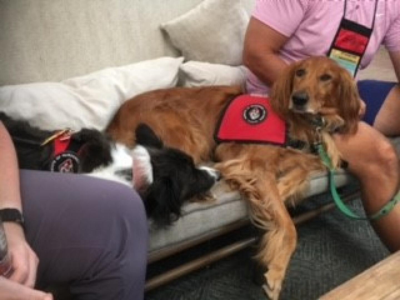 Comfort Dog Ministry